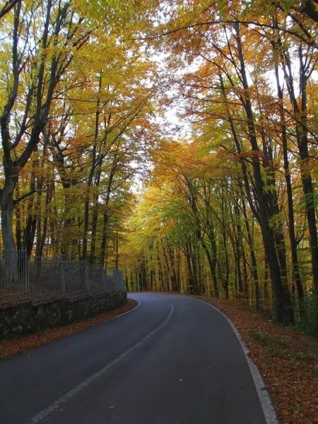 penice_autunno 019