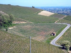 10colli_viticoli 007