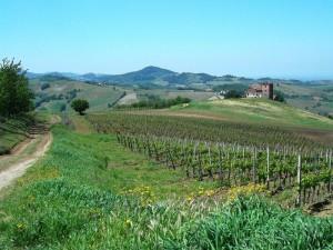 10colli_viticoli 042