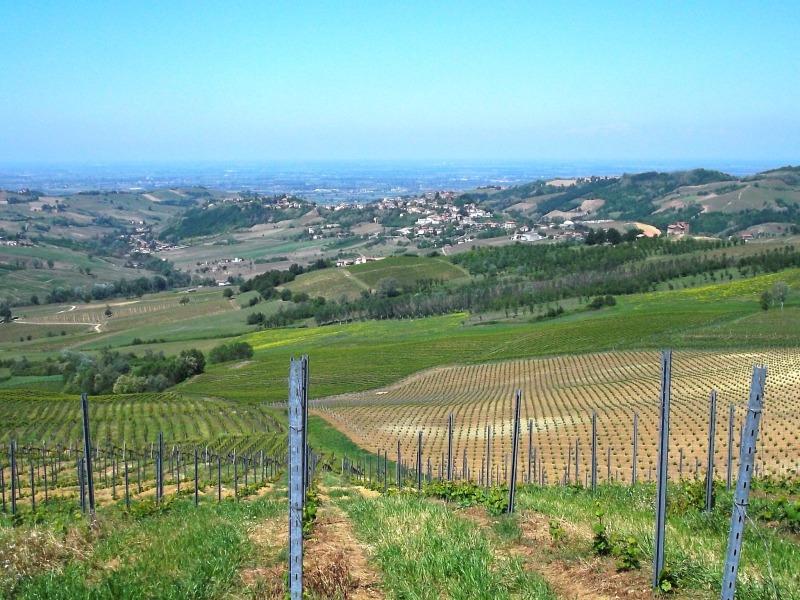 10colli_viticoli 047
