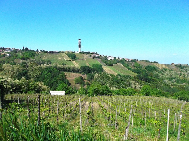 10colli_viticoli 115