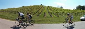 10colli_viticoli_pan2