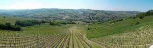 10colli_viticoli_pan3